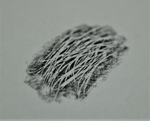 Rohskizze einer Fellzeichnung