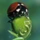 Krabbelndes Glück - Ein digitaler Mutschekäfer entsteht