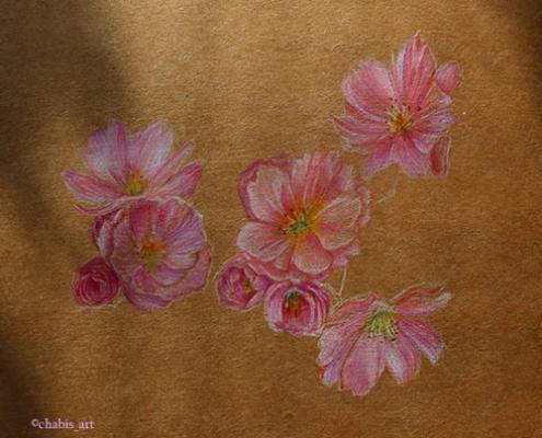 Buntstiftzeichnung mehrerer Apfelblüten